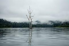 Árvore no rio Imagem de Stock Royalty Free