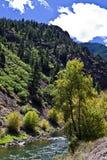 Árvore no rio de Gunnison Imagens de Stock