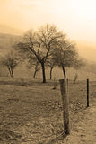 Árvore no sepia imagens de stock