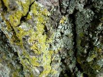 Árvore no sepia Imagens de Stock Royalty Free