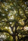 Árvore no sol Imagem de Stock Royalty Free