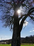 Árvore no sol Fotos de Stock