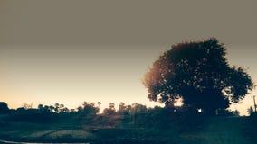 Árvore no sol imagens de stock