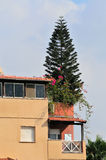Árvore no telhado Foto de Stock
