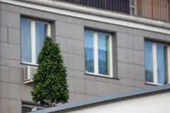 Árvore no telhado, ajardinando, proteção de natureza evergreen decoração de paisagens urbanas foto de stock