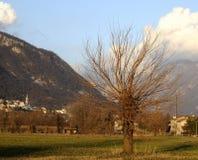 Árvore no vale Fotografia de Stock