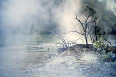 Árvore no vapor fotografia de stock