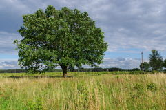 Árvore no vento Fotografia de Stock