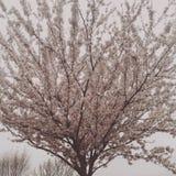 Árvore no vento Fotos de Stock Royalty Free