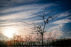 Árvore nobre Fotografia de Stock
