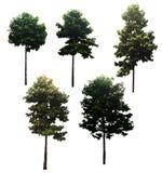 Árvore o bonito, aplicável a uma vasta gama imagem de stock royalty free