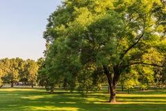 A árvore, o templo dos céus Foto de Stock Royalty Free