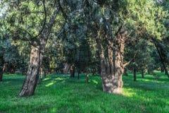 A árvore, o templo dos céus Foto de Stock