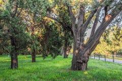 A árvore, o templo dos céus Imagem de Stock