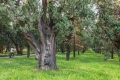A árvore, o templo dos céus Fotos de Stock Royalty Free