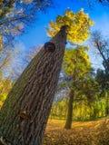 Árvore oblíqua na cena foto de stock