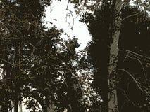 Árvore original Scape Imagens de Stock