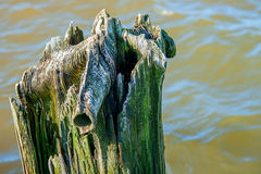 Árvore pútrido fotografia de stock