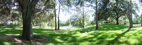 Árvore panorâmico Imagens de Stock Royalty Free