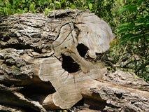 Árvore para baixo nas madeiras fotos de stock
