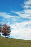 Árvore, pasto, nuvens Imagem de Stock