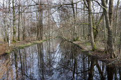 Árvore pela água imagem de stock