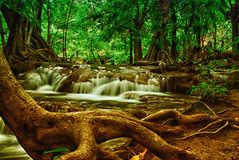 Árvore pela cachoeira Foto de Stock