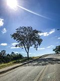 Árvore pela estrada em um dia ensolarado Imagem de Stock
