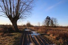 A árvore pela estrada no frio imagens de stock