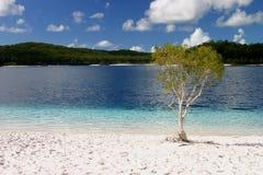 Árvore pelo lago water fresca fotografia de stock royalty free