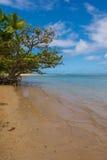 A árvore pelo mar, Kauai Imagens de Stock