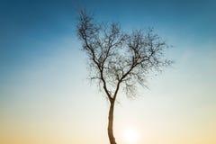 Árvore pelo sea4 Fotos de Stock