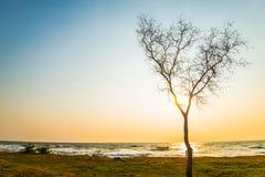Árvore pelo sea3 Imagem de Stock