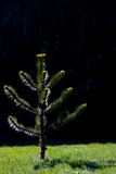 Árvore pequena fotografia de stock
