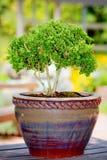 Árvore pequena Foto de Stock Royalty Free