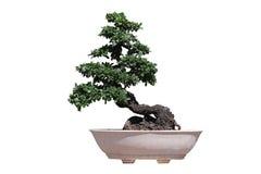A árvore pequena Fotografia de Stock