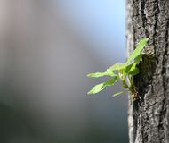 Árvore pequena Imagens de Stock Royalty Free