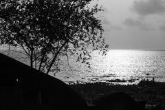 Árvore pequena com espinhos além de uma praia imagens de stock