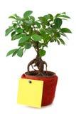 Árvore pequena com um papel vazio Imagem de Stock Royalty Free