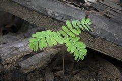 Árvore pequena da plântula do broto natural Fotografia de Stock Royalty Free