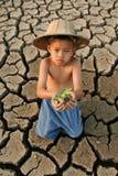 Árvore pequena da posse da criança da crise de água fotografia de stock