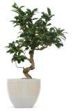Árvore pequena do agregado familiar Foto de Stock