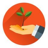 Árvore pequena em uma mão Fotografia de Stock