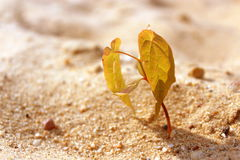 A árvore pequena está lutando por sua vida Fotos de Stock Royalty Free