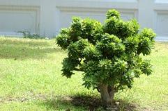 árvore pequena exterior na luz solar Foto de Stock