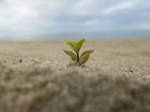 Árvore pequena na areia Fotos de Stock Royalty Free