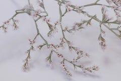 Árvore pequena na flor imagens de stock
