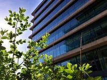 Árvore pequena na frente do escritório imagem de stock royalty free