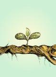 Árvore pequena na madeira Fotografia de Stock