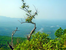 Árvore pequena na montanha Fotos de Stock Royalty Free